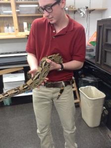Logan snake